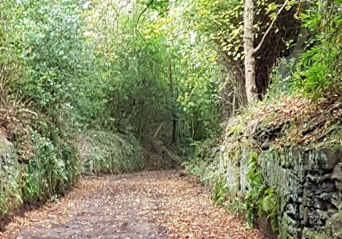 Friends of Childwall Woods and Fields